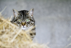 Cat at the horse riding school III