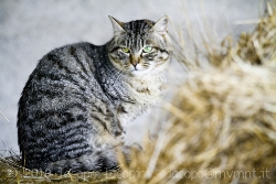 Cat at the horse riding school II