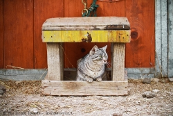 Cat at the horse riding school IV