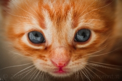 Portrait of a small red cat