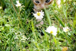 Playing with daisys